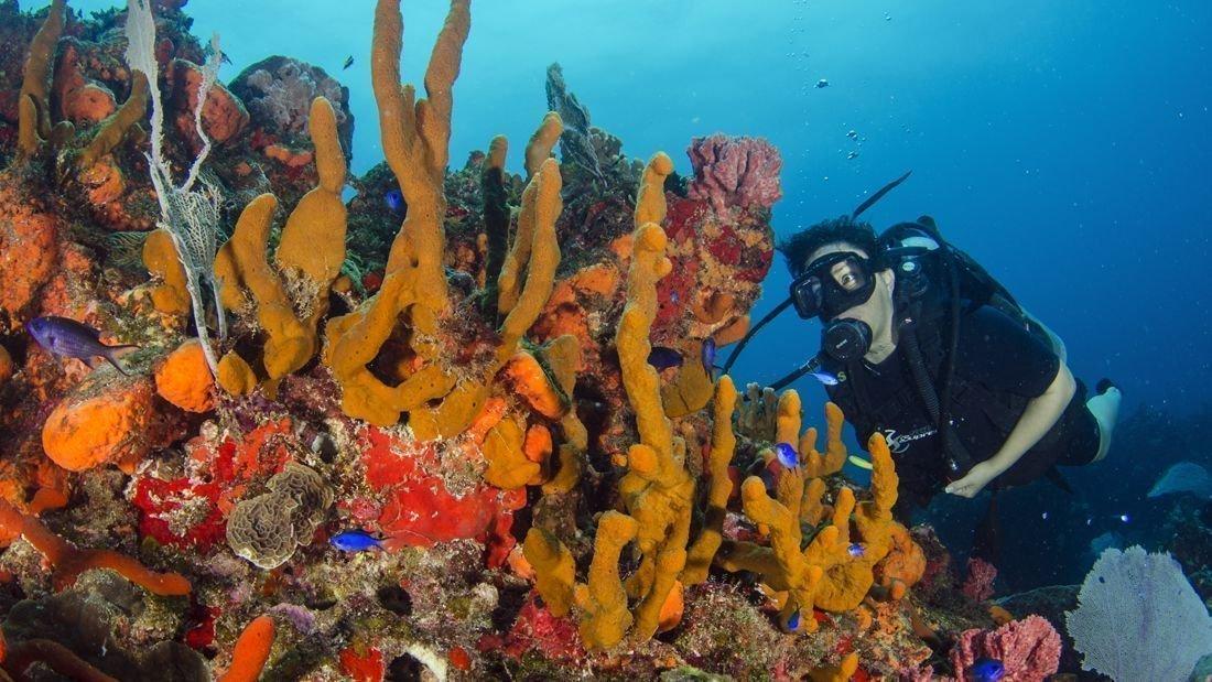 bright-colored-reefs-cancun_1100x619