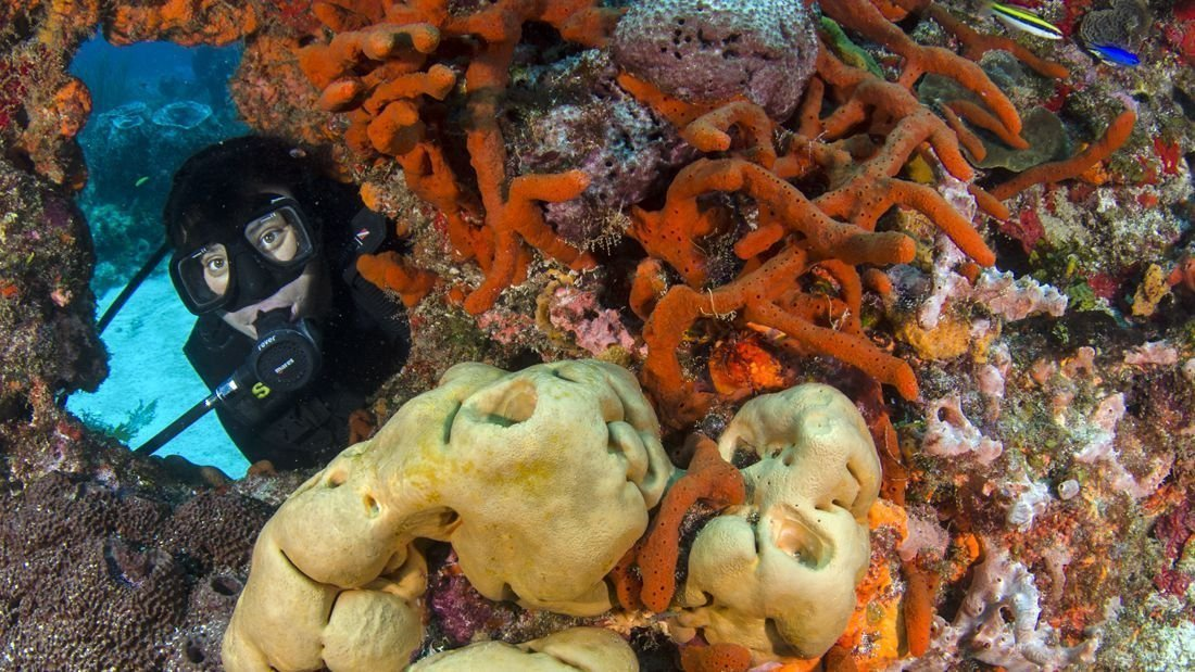 diving-coral-reef-cancun_1100x619